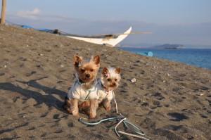 散歩でよく行っていた茅ヶ崎の海でココアとミルク