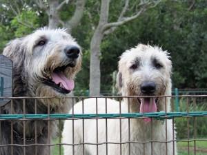 珀(右)は名前の通り体毛が白っぽいのが特徴