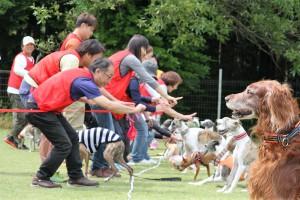 足柄運動会の様子 犬も人もとっても楽しそうです!