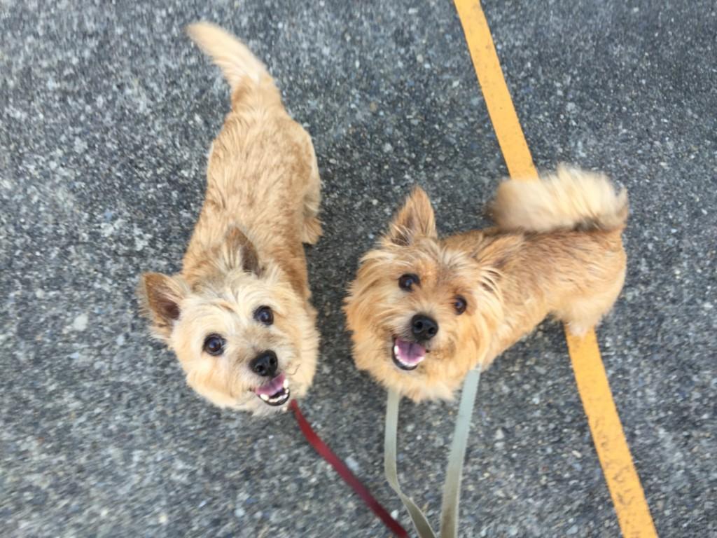2頭とも、いつまでも元気で一緒にお散歩行こう! 健康診断ではレントゲンなどもやるから、それで発見できる病気もあるもんね