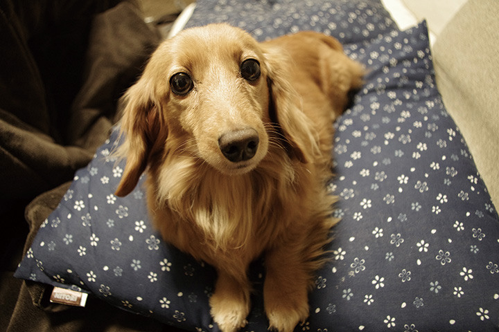 愛犬に関する悩みを解決! 教えて ワンコ先生!〜食糞をやめさせたい