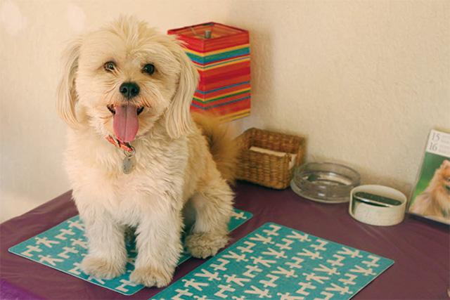 サンディエゴで出会った心温まる保護犬のはなし 運命のデザイは雨降る夜に