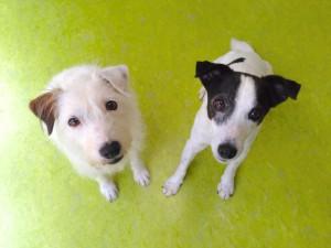 メイ(左)とシャドー(右)