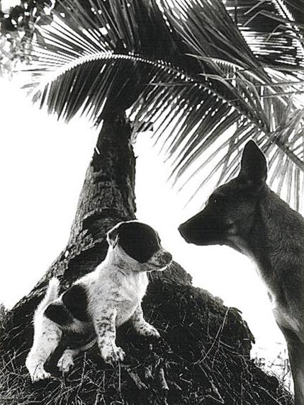 タイには、名前も付けられ、狂犬病の予防接種も受け、地域犬として近隣の人々に世話をされる犬たちも多くいます。こちらは、観光客にもかわいがられるサメット島の犬たち(写真集『うみいぬ』臼井京音著、アーリスト発行より)