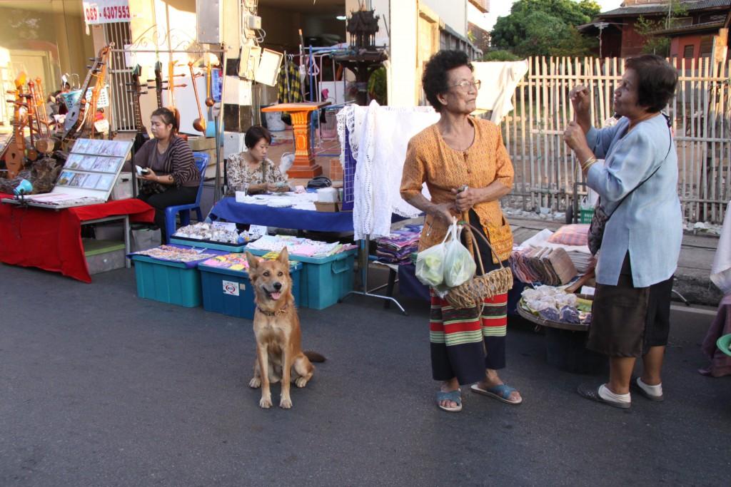 タイには、地域の人々に食べ物をもらってかわいがられている地域犬(コミュニティー・ドッグ)が多数。名前がつけられていたり、避妊や去勢がされている犬もいます