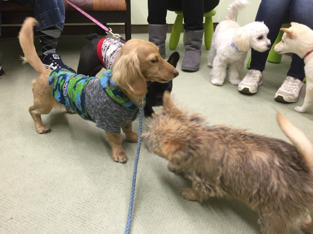 ドッグトレーナーが見守るなか、ほかの犬にあいさつ。積極的なコは、リードを付けたまままでハンドリングすることも