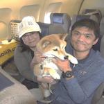 国内航空会社初ペットチャーター便ツアーANA「ワンワンフライト」